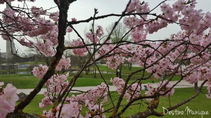 Cerejeiras-Alemanha-Primavera