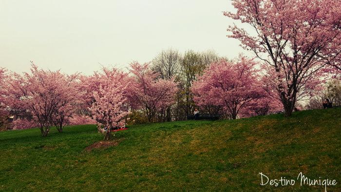Cerejeiras-Munique-Primavera