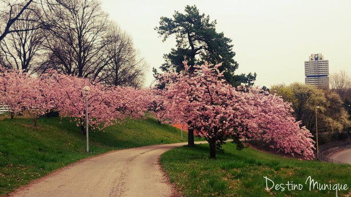 Cerejeiras-Primavera-Munique-BMW