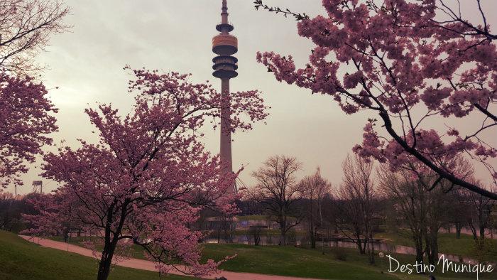 Cerejeiras-Primavera-Munique-Olympiaturm