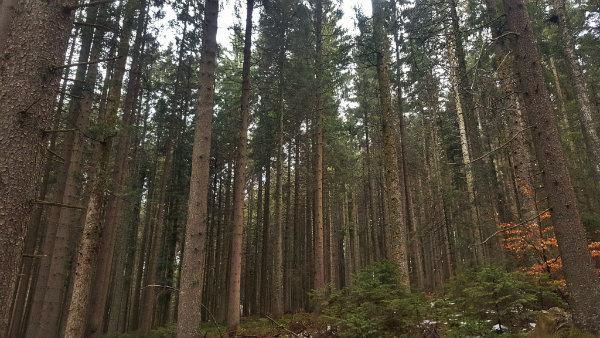 Floresta Negra, Alemanha, dicas