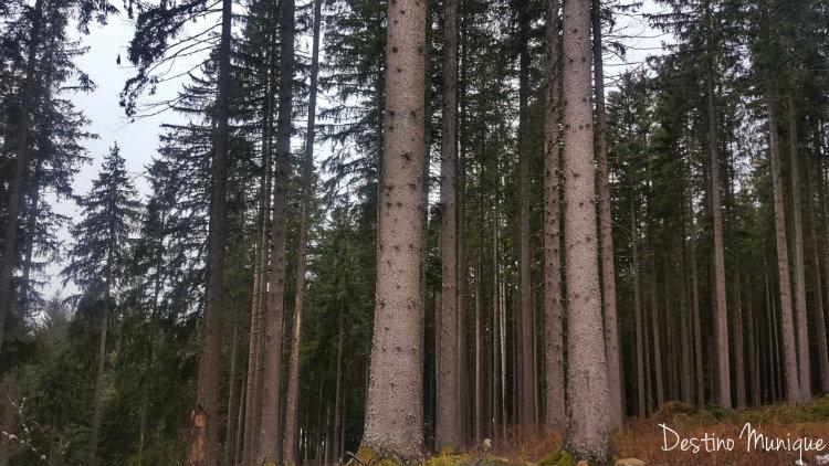 Floresta-Negra-Dicas-Alemanha