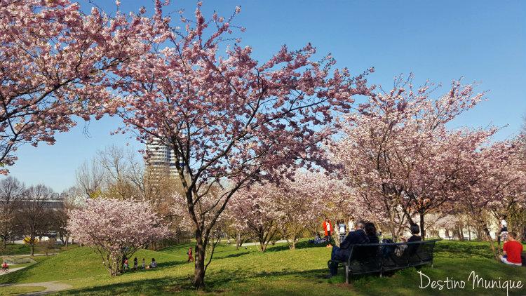 Marco-Munique-Tempo-Cerejeiras