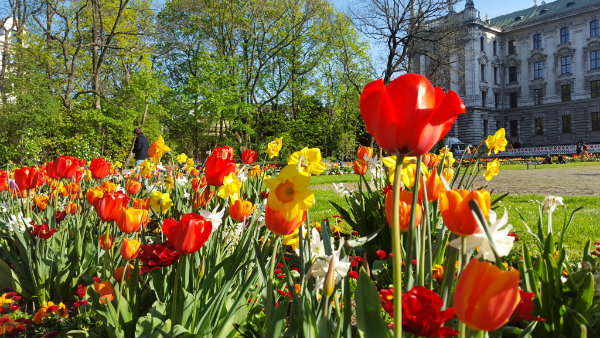 Primavera em Munique, dicas, guia brasielira em Munique