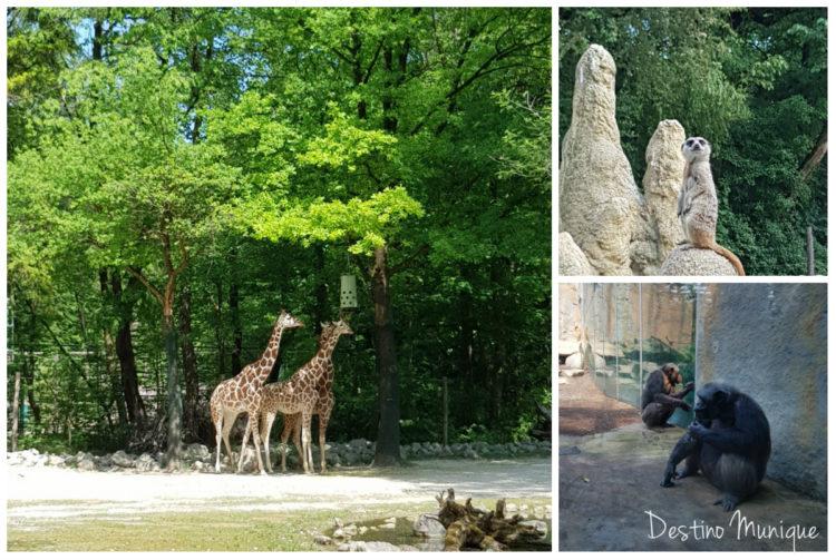 Zoologico-Munique-Alemanha