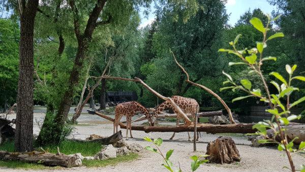 Zoológico de Munique, Hellabrunn, Alemanha; Munique com Crianças, Guia brasileira em Munique