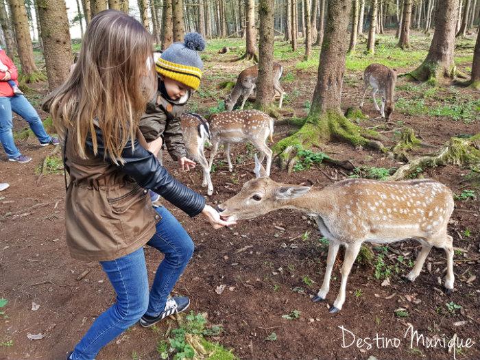 Bergtierpark-Blindham-cervos