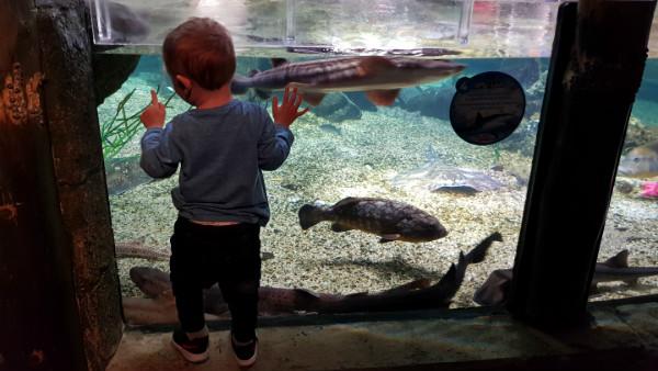 Dicas de Munique com crianças, Munique com bebês, Alemanha, atrações