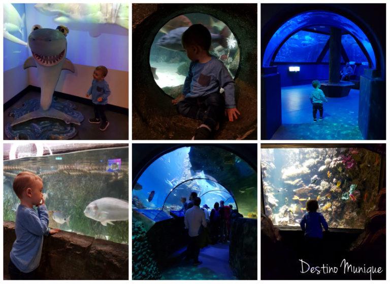 Munique-criancas-Sea-Life-Aquario-768x561