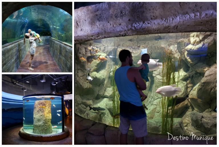 Malta-Aquario-Dicas-768x515